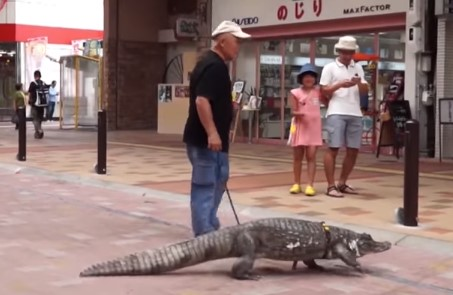 メガネカイマンをペットとして飼っている日本人男性