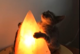 恍惚の表情を浮かべながらランプで暖を取るニャンコ