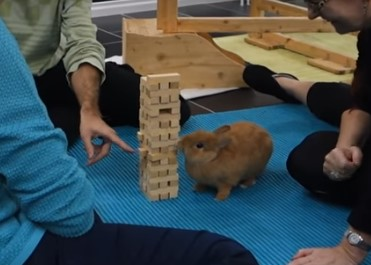 ウサギがジェンガにチャレンジ