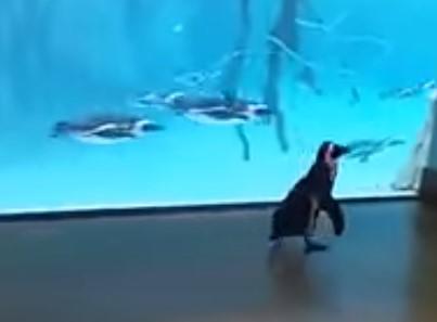 ぼっちになってしまったペンギン