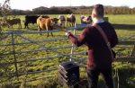 集まった牛にベースの演奏を聴かせてみると…