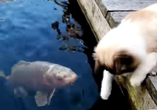 鯉をなでなでするニャンコ