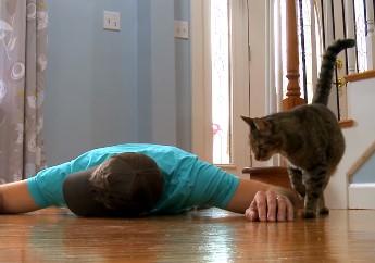 ネコの前で飼い主が死んだふりしたらどうなるか実験