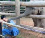 飼育員さんと遊びたい赤ちゃんゾウ