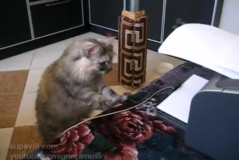 綺麗に印刷できたか、プリンターの前でチェックする猫